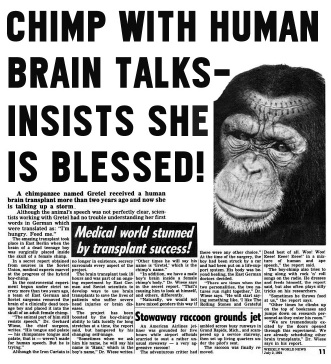 CHIMP BLESSED WITH HUMAN BRAIN_Where Excuses Go to Die